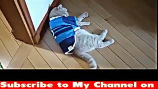 Try Not To Laugh Challenge - Funny Cat & Dog Vines compilation 2018 - Funny Cats Vine Compilation