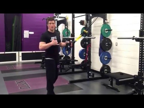 TRX Jump Squat Progressions