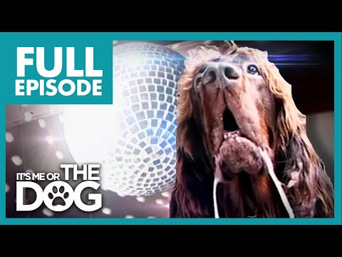 The Dog With OCD: Max   Full Episode   It's Me or The Dog