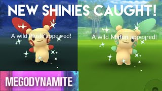 SHINY PLUSLE AND MINUN CAUGHT IN JAPAN!