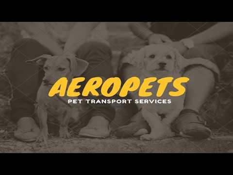 Aeropets Pet Transport Services