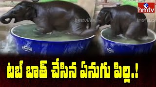 Elephant calf enjoys bathing in water tub, video goes vira..