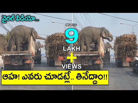 Viral Video: Elephants eating sugarcane in moving truck