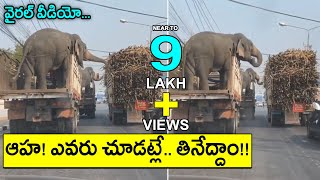 Viral Video: Elephants eating sugarcane in moving truck..