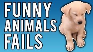 Funny Animal Fails January 2017   A Fail Compilation by FailUnited