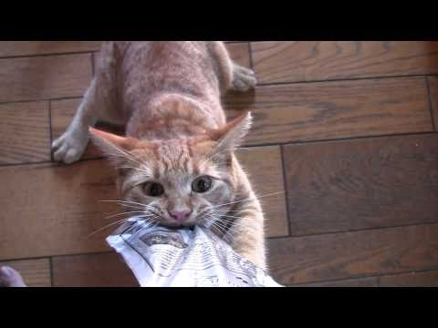 Ten kot potrafi postawić na swoim!