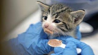 Inside Best Friend Animal Society's Kitten Nursery | Los Angeles Times