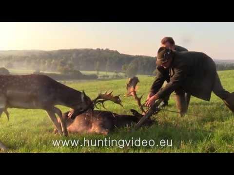 Spašavanje jelena lopatara