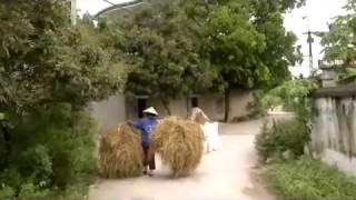 Ha Nam Đất Mẹ Anh Hùng - Cảnh Đẹp Quê Hương và Con Người Hà Nam