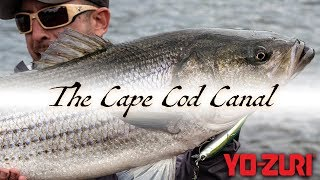 Striper Fishing: Cape Cod Canal (2019)