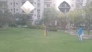 Backyard Cricket Practice Highlights