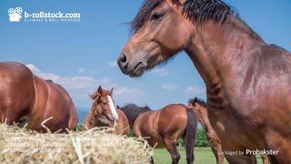 Royalty Free B-roll Stock Video [Horses Package] - www.b-rollstock.com