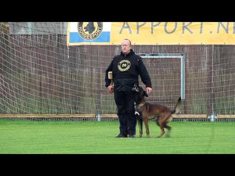 NIK 2016 Harry Kwakman Daneskjold Farley Obedience 90 P