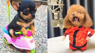 Baby Dogs - Cute and Funny Dog Videos Compilation #9 | Aww Animals