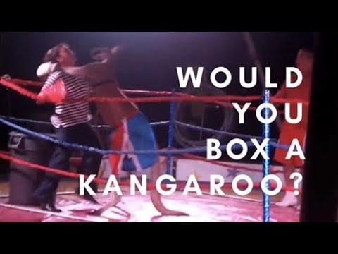Kobieta walczy na ringu z... kangurem!