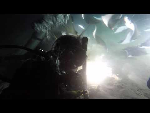Mobula Ray Night Dive Espiritu Santo Island