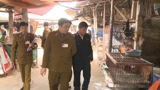 Tin Tức 24h: Lạng Sơn tăng cường phòng chống dịch cúm AH7N9