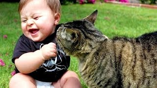 CATS AND BABIES ★ MOST Crazy Cats Annoying Babies | Funny Baby And Animals Compilation