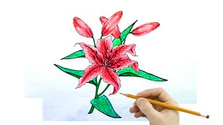 Cách Vẽ Hoa Ly - How to draw Lily Flower