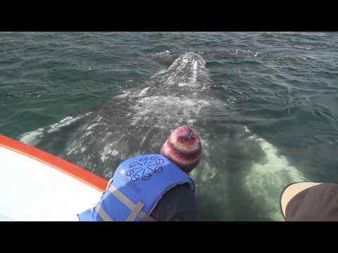 Whale Watching in Laguna San Ignacio Feb 2012