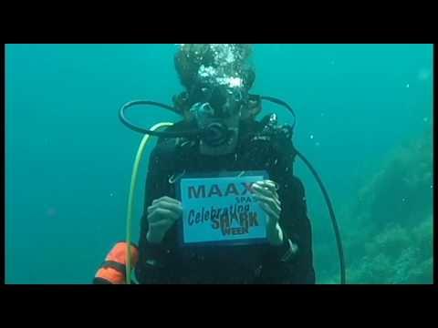 Celebrating Shark Week 1