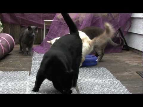 """Cats vs. Bubble Wrap"" - Chase Holiday, Los Angeles, California - - Bubble Wrap® brand cushioning material is no match for these fun felines."