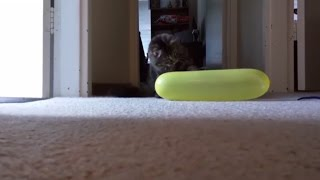 Funny Cats Playing With Balloons 🎈 Cats VS Balloons Compilation
