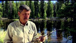 National Geographic American Paranormal - Bigfoot