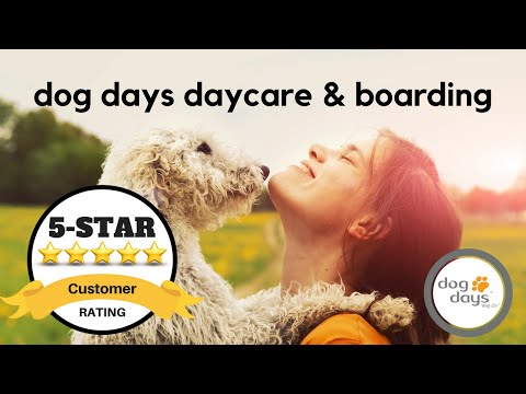 St Paul Dog Boarding Services Exciting 5 Star Review