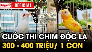 Cuộc thi của những chú chim 300 - 400 triệu VNĐ - SAIGONTV