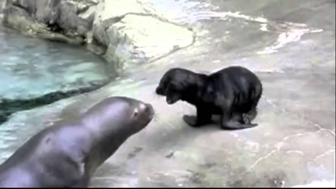 planets funniest animals youtube - photo #29