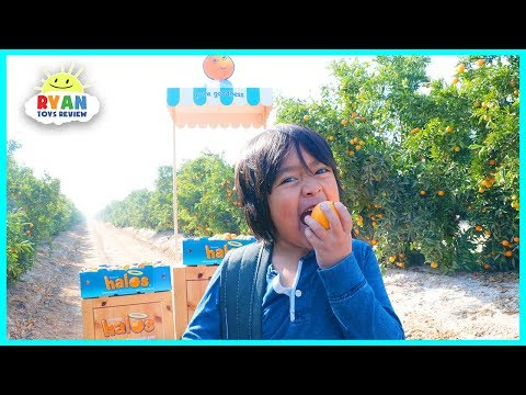 Ryan ToysReview and his parents' visit to the Wonderful Halos Mandarin Orchards