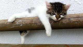 ベンチの上で眠る猫たち