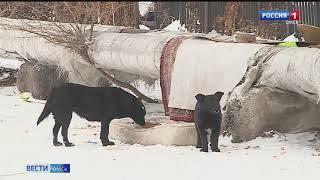 Налог на содержание домашних животных может появиться в России в ближайшие годы