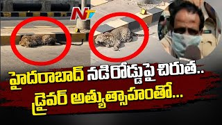 Leopard spotted with injuries in the middle of road in Hyd..