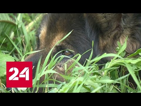 Тайная смерть домашних животных: кто травит собак кинолога