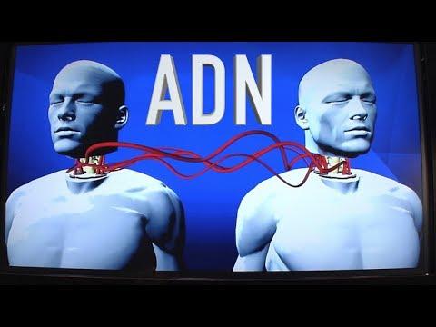 ¿Qué le pasa al ADN durante un trasplante?