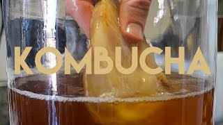 Beginners Guide To Fermentation: Kombucha Making