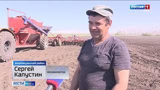 Омские аграрии еще не завершили посевную, а на полях уже появились первые всходы