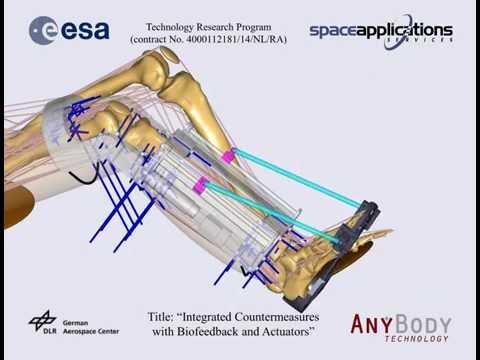 [SOLEUS] Musculoskeletal Simulation of Countermeasure Exercise in Space