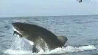 サメジャンプ集1