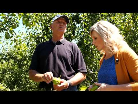 WaGrown Pears S3E11: Stamps Orchard