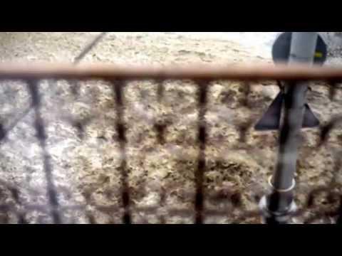 Потоки води під час зливи з вул. Б. Хмельницького, м. Чернівці 25/05/2013