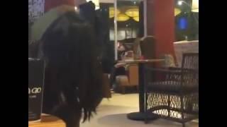 Biến Căng Vl | Chồng Hàn Quốc Cặp Bồ Bị Vợ Việt Đánh Ghen Tại HIGHLAND CAFE