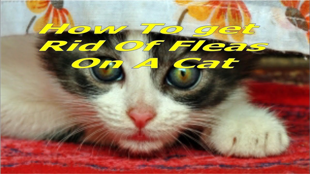 Pin Tapeworms In Cats on Pinterest