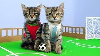 Funny Cats 2019 مقاطع مضحكة للقطط