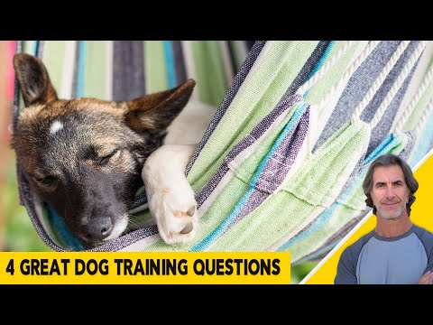 4 Great Dog Training Questions - Dog Training Tips