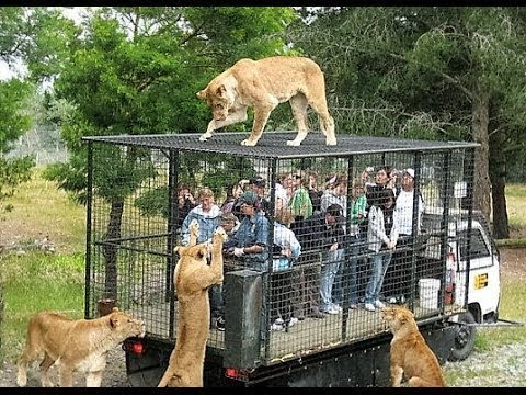TOP 10 Fugas De Zoos Que Acabaron Mal    TOP 10 VÍDEOS