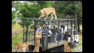 TOP 10 Fugas De Zoos Que Acabaron Mal || TOP 10 VÍDEOS