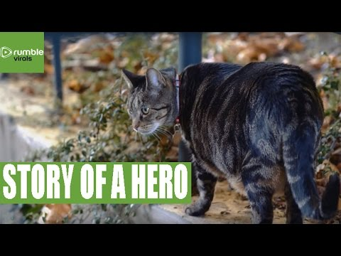 The uplifting story of Mr. Pickles
